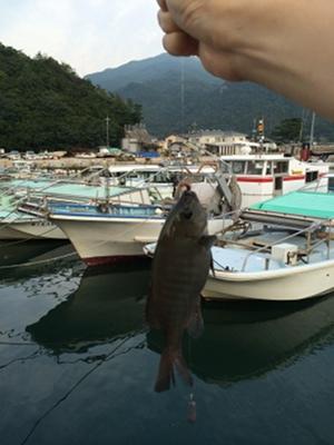 shoudoshima2_08_fish